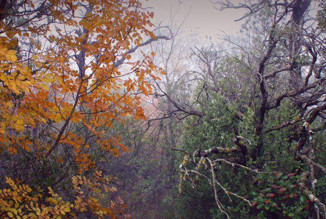 Bosque húmedo Mediterráneo